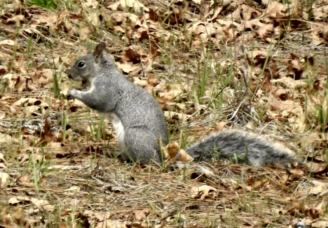 squirell1