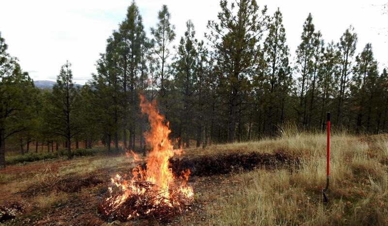 First Fires